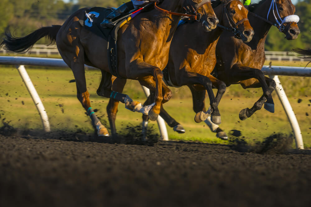 Horse betting trifecta win place show free betting win real money